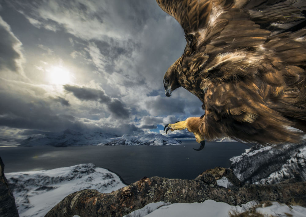 Снимок Land of the eagle норвежского фотографа Audun Rikardsen, победивший в категории Behaviour: Birds фотоконкурса 2019 Wildlife Photographer of the Year